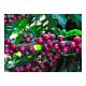 Café Delta Angola, 250 g, molido