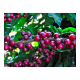 Café Delta BIO Coffee, 220 g, molido
