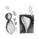 Cafetera Alessi Pulcina MDL02/3B, 3  tazas, negro, aluminio