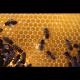 Miel La Puela Bosque, dosificador, 350 g
