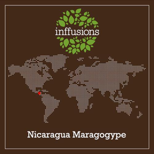 Café de Origen Nicaragua Maragogype, grano, 250 g